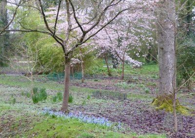 Evenley Wood